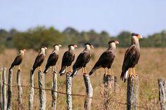 el birdwatching, furor en los Esteros del Ibera. Corrientes, Argentina
