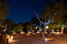 bushveld wedding ceremony - Google Search