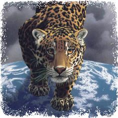 Spirit of Jaguar Role: Shaman/Shamaness Lesson: Integration Element: Earth/Water Wind: West The Quest Within Medicine: Prophecy & Shapeshifting Keywords: Power of Mystery & Silence. Magical Abilities.