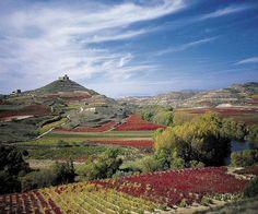 Baja el consumo de vino en España