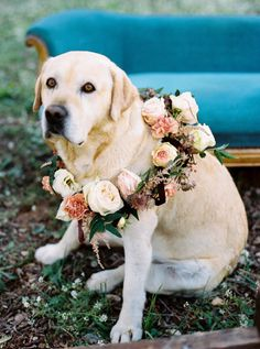 Rustic + Elegant Provencal Wedding Inspiration - Style Me Pretty Dog Wedding, Wedding Tips, Wedding Bride, Dream Wedding, Wedding Day, Wedding Ceremony, Cake Wedding, Wedding Dreams, Bridesmaid Outfit