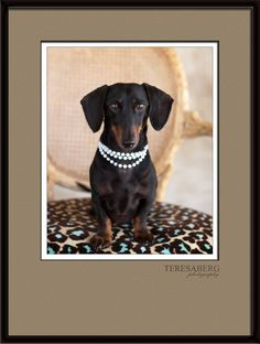 Teresa Berg Photography - Offers up her services to rescues.
