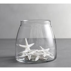Pottery Barn Mini White Starfish Vase Filler (780 RUB) ❤ liked on Polyvore featuring home, home decor, white, pottery barn, white home decor and white home accessories
