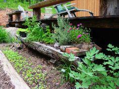 A beautiful way to grow herbs and small flowers is in the scooped-out center of a hollow log