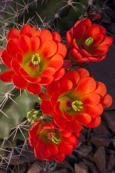 Arizona desert in bloom. → For more, please visit me at: www.facebook.com/jolly.ollie.77