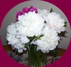 Peonies from our flower beds.