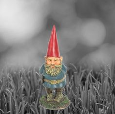 The look of intensity is the wisdom of years as leader of gnomes.. we think.