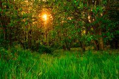 Dobai Szilvia  Pusztavámi erdő mélyén Az egész napos kószálás a nagyvadak után egy csodás naplementébe torkollt a pusztavámi erdőben.