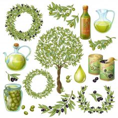 Olive organic elements set   Free Vector #Freepik #freevector #food #tree #green #nature Olive Plant, Leaf Symbol, Blank Background, Olive Oil Packaging, Olive Wreath, Olive Oil Bottles, Free Vector Illustration, Tree Silhouette, Organic Oil