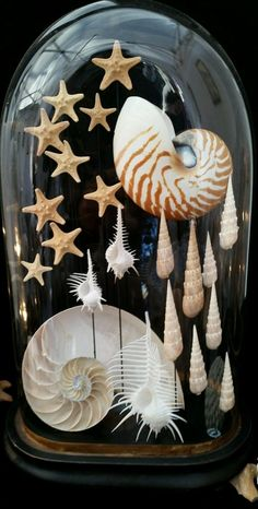 Suspended seashells under cloche Seashell Display, Seashell Art, Seashell Crafts, The Bell Jar, Bell Jars, Seashell Projects, Shell Decorations, Sea Crafts, Glass Domes