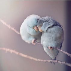 "7,980 Likes, 74 Comments - Cute Animals (@aniimalscute) on Instagram: ""Love birds  TAG a friend! 