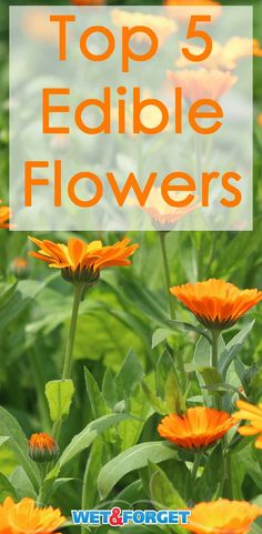 Brighten up your kitchen and garden with these 5 edible flowers!