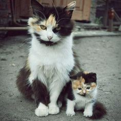 #Cute #cat and a #kitten. . .  #catsofinstagram