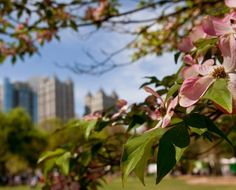 Piedmont Park makes Midtown one of Atlanta's favorite neighborhoods. Click the link and explore this area. Browse the latest Midtown homes, condos, lofts and townhouses.