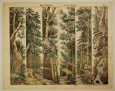 Wald (Kulissen.) Forêt (Coulisses.) No. 9.
