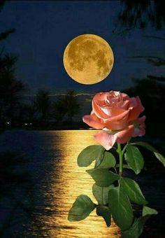 شبتون بخیر و در آرامش خداوند Beautiful Moon, Beautiful Roses, Green Tara Mantra, Stars Night, Wallpaper Nature Flowers, Moon Images, Good Night Messages, Moon Photography, Good Night Image