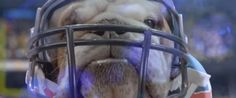 These Cats And Dogs Aren't Just Playing Football, They're Here To Deliver An Important Message