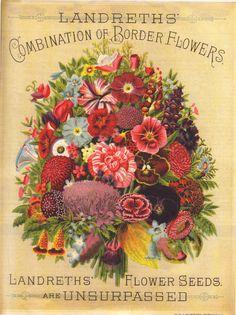 Landreth's Flower Seeds are Unsurpassed Vintage Cards, Vintage Paper, Vintage Postcards, Seed Packaging, Vintage Packaging, Seed Catalogs, Garden Catalogs, Seed Art, Vintage Seed Packets