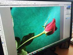 Es geht weiter. Letzte Woche gab ich den Grundlagen-Kurs Photoshop. Und am Donnerstag geht es dann in Bern weiter: Adobe Photoshop CC Modul 2  Du erlernst eine verbesserte und effizientere Bearbeitung deiner Bilder Nicht optimal belichtete Bilder und nicht stimmige Farben korrigierst du... Shops, Bern, Adobe Photoshop, Fruit, Painting, Thursday, Reunions, Colors, Pictures