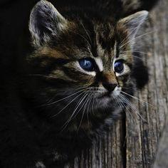 Nomes para gatos fêmeas em japonês. Está procurando nomes japoneses para sua gata? Aqui encontrará nomes muito bonitos e com significado. Sabemos que escolher um nome para a nossa adorável gatinha recé...