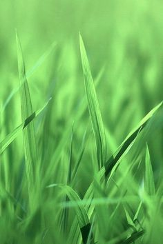 Phone smartphone wallpaper background backgroundswallpapers grass close up smartphone wallpaper voltagebd Image collections