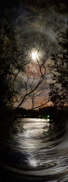 Nocturnal by Peter Westermann; beautiful darkness moon through the trees Beautiful Moon, Beautiful World, Pretty Pictures, Cool Photos, Amazing Photography, Nature Photography, Night Photography, Shoot The Moon, Belle Photo