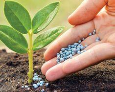 Зачастую нитрофоску используют для повышения всхожести семян, для ускорения вегетативных процессов, для повышения количества полноценной завязи. Ее удобно применять и легко хранить. Об особенностях использования нитрофоски при выращивании садово-огородных и цветочных культур расскажем в этой статье.