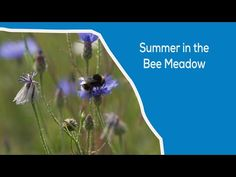 (829) SUMMER IN THE BEE MEADOW - YouTube Wild Ones, Bee, Youtube, Summer, Honey Bees, Summer Time, Bees, Youtubers, Youtube Movies