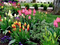 How we do love tulips! (from the Posie gets cozy blog)