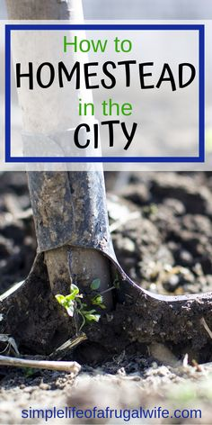Have you always dreamed of homesteading but thought you had to wait until you lived in the country? Think again! Urban homesteading is growing in popularity. You can have a backyard farm. Homestead Gardens, Farm Gardens, Homestead Farm, Homestead Living, Organic Gardening, Gardening Tips, Vegetable Gardening, Urban Gardening, Urban Farming