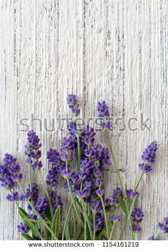 Lavender Background Lavender Flowers On White Stock Photo (Edit Now) 1154161219 White Stock Image, Lavender Flowers, Top View, Textured Background, Photo Editing, Royalty Free Stock Photos, Illustration, Plants, Pictures