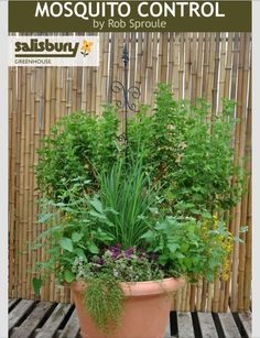 ❤️DIY Mosquito Control Container❤️ #Home #Garden #Trusper #Tip