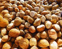 Monachelle #ricettedisardegna #monachelle #sardegna #sardinia #food
