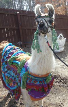 Llama Twist modeling a costume I made.