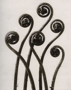 Karl Blossfeldt- New Objectivity Photographer Karl Blossfeldt, Albert Renger Patzsch, Art Nouveau, Art Deco, New Objectivity, Photo Exhibit, Jugendstil Design, Fotografia Macro, Paperclay