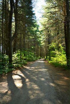 Pog Lake Algonquin Park Ontario Canada Algonquin Park, Forests, Ontario, Country Roads, Canada, Camping, Adventure, American, Places