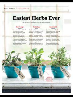 Growing herbs.