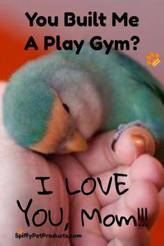 You Built Me A Play Gym? I LOVE YOU, Mom!!!