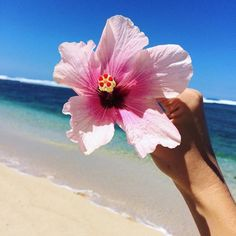 Image about cute in ✨Summer Vibes✨ by emily copeland Beach Flowers, Tropical Flowers, Pretty Flowers, Beach Photography, Nature Photography, Tumblr Flower, Vibes Tumblr, Art Gallery Wedding, Water Images