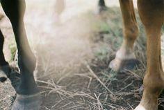 horse #horse