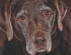 Is Your Dog a Senior? The Answer May Surprise You! http://www.babble.com/pets/is-your-dog-a-senior-the-answer-may-surprise-you/ #dogs #seniordogs