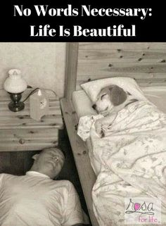 No Words Necessary: Life Is Beautiful. The Wonderful Thing About Authentic Photographs is That They Often Render Words Unnecessary. Life is an opportunity, benefit from it. Funny Animal Pictures, Cute Funny Animals, Funny Images, Funny Dogs, I Love Dogs, Puppy Love, Cute Puppies, Cute Dogs, Tierischer Humor