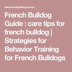 French Bulldog Guide : care tips for french bulldog | Strategies for Behavior Training for French Bulldogs