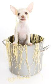 Homemade Dog Treat Recipes  Recipes That We Love!  Even A Birthday Cake With Icing!