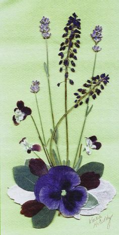 Pansy and spring flowers