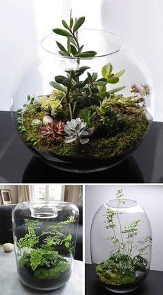 Potes de vidro ou até mesmo um aquário pode se tornar um vaso para planta que não precisam de muitos cuidados.