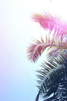 Sunshine and Palm Trees