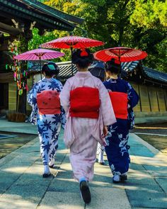 August 2017: maiko Umechie, Umekana, and Umehina of Kamishichiken by youpv on Instagram (◡ ‿ ◡ ✿) Moving to a new server soon! Support me on P a t r e o n || Instagram