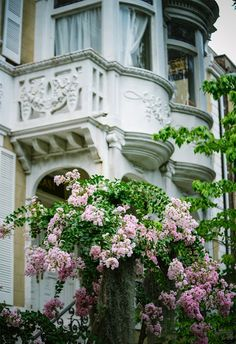 Blooming flowers in Savannah, Georgia.