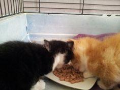 Eerste blikvoer. Katje van Kirsten en zwart witte snappen het meteen!